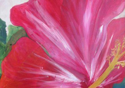 Hibiscus I See You